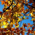 Autumn Leaves and Sky, by Kenneth Byrd