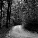 Forest Path (Black &amp; White), by Kenneth Byrd
