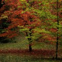 Autumn Trees, by Kenneth Byrd