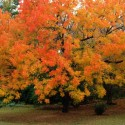 Orange Autumn Leaves, by Kenneth Byrd