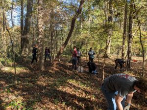 People in wooded area pulling up invasive plants.