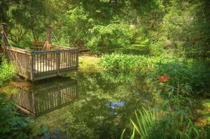 Pond at UA Arboretum